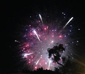 cropped palmtree firework